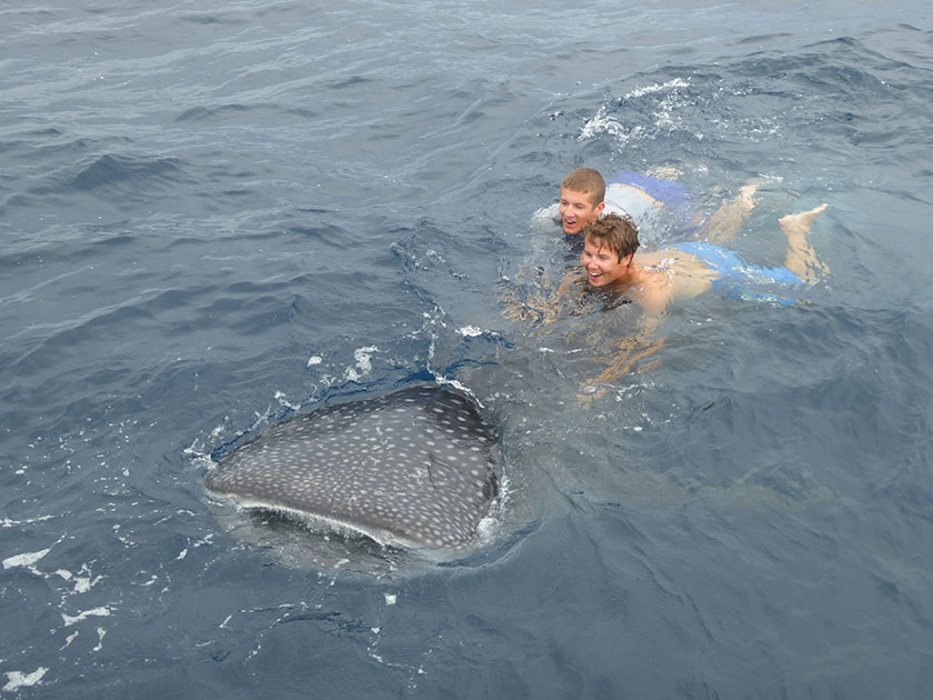 Kids playing with a Whaleshark in Panama
