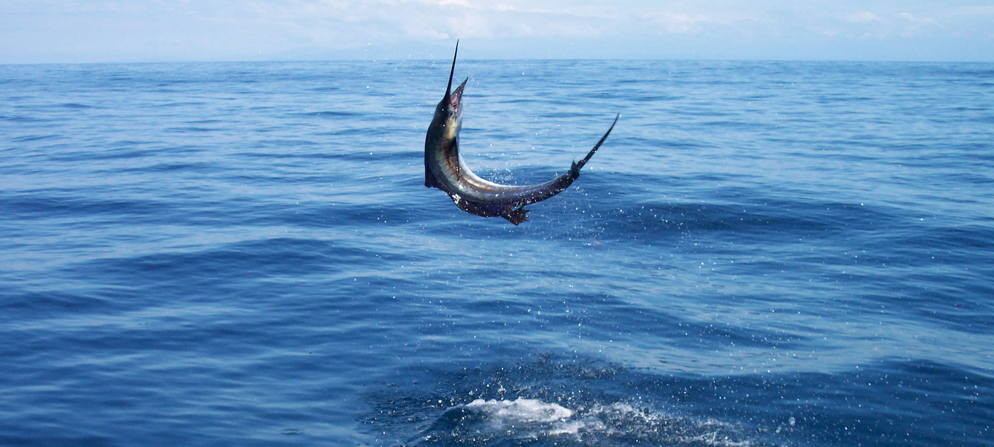 Panama Big Game Fishing Marlin