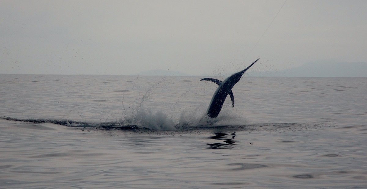 Marlin Fishing Regulations in Panama