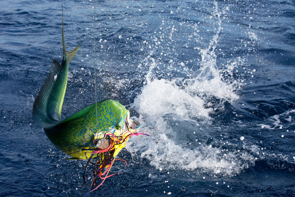 Pictures panama big game fishing club and resort for Panama sport fishing